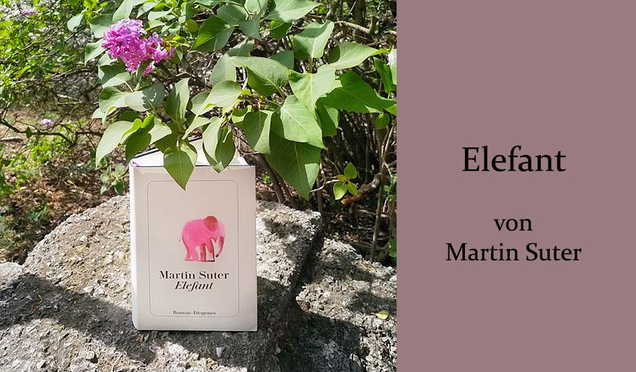 Elefant Suter
