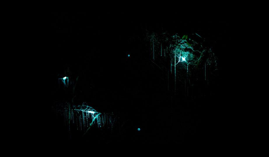 Glowworms